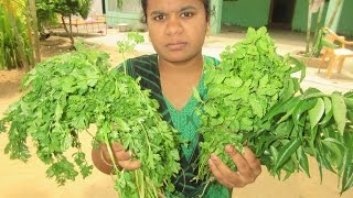 CORIANDER, MINT, CURRY LEAVES Chutney Traditional Way of Cooking in My VILLAGE | VILLAGE FOOD