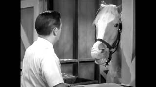 The New Mr Ed Episode 1 - Ed Gets an STD