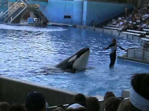 Dawn Brancheau la entrenadora y la orca
