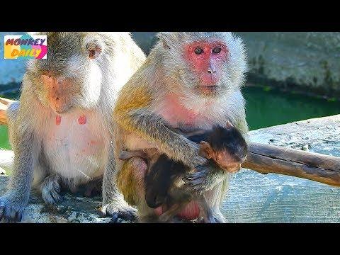 Xxx Mp4 Travel To See Pity Tiny Heidi Baby At Som Pov Group Poor Heidi So Thin Amp Weak Monkey Daily 2087 3gp Sex