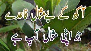 AAK K FAIDY, AAKH K FAIDY, AAK AAKH K FAIDY PEHJAN ESTAMAL Urdu Hindi By Hakeem Hazik