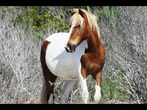 Search for Wild Horses