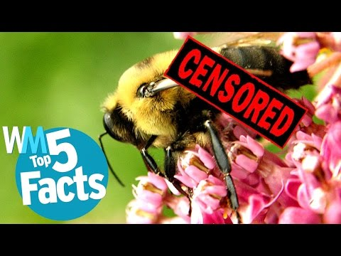 Top 5 Shocking Animal Sex Facts