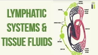IGCSE Biology Revision - Part 11 - Lymphatic System & Tissue Fluid Formation