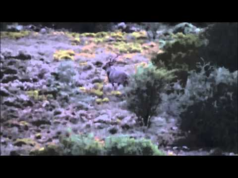 Eastern Cape Kudu Bull 1 @ 362m (30-06 spr)