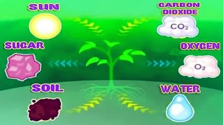 Photosynthesis, Leaf Structure & Function, Science Videos for Kids