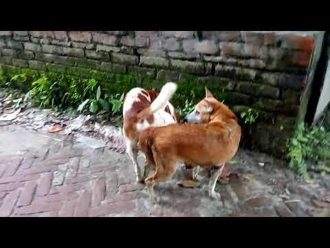 Xxx Mp4 Best Amazing Dog Sex Video 3gp Sex