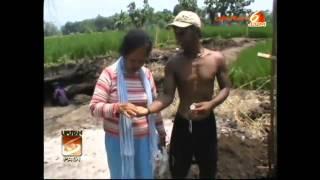 Video Heboh! Penemuan Emas Harta Karun dan Tulang Manusia jaman Kerajaan di Probolinggo   YouTube