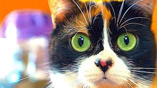 8 Simple LifeHacks for Cats!