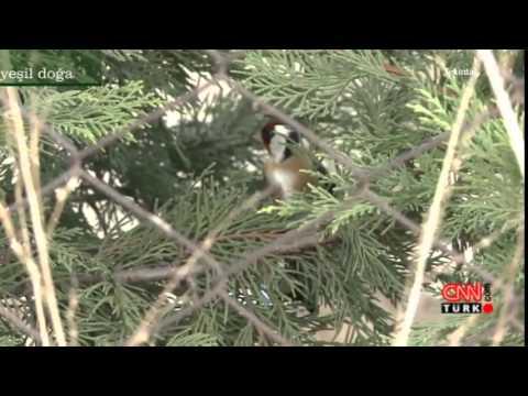 Yeşil Doğa 10 01 2015 Cumartesi CNN TÜRK