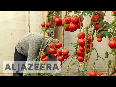 Israeli factories damaging Palestinian farms