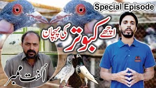 Pakistani Best High Flyer Pigeons Of Ulfat mimmber (Lahore)