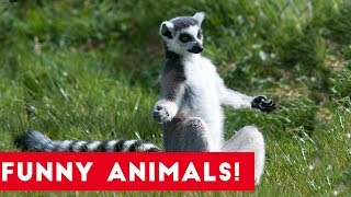Funniest Pets of the Week Compilation June 2017 | Funny Pet Videos