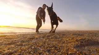 Taruk, o Doberman, descobre a praia