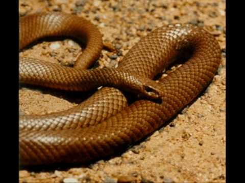 Top 10 Most Venomous Snakes