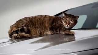 Mercedes CLA TV Werbung   Katze   funny Mercedes Benz CLA