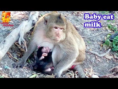 Xxx Mp4 ฺTo See Baby Eat Mother S Milk To Sleep 3gp Sex