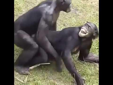 Xxx Mp4 Hahaha Look Monkey Sexy 3gp Sex