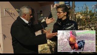 BOOM: Zotëria në pikë të hallit me kaposhin dhe pulat e komshiut