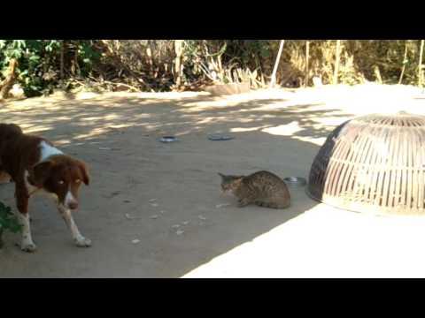 Xxx Mp4 बिल्ली और कुत्ते की लड़ाई श्रीयादे गांव जोधपुर 3gp Sex