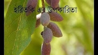 হরিতকির ওজানা ৭টি  ঔষধি গুনাগুন//Horitokir Upokarita//হরিতকি এর উপকারিতা