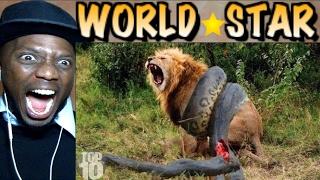 10 CRAZIEST Animal Fights Caught On Camera..