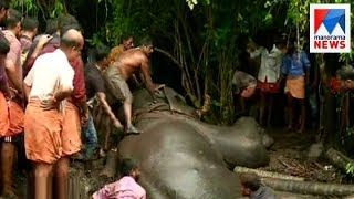 Elephant swamped at Thuravoor, rescue operations on | Manorama News