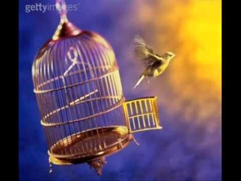 Pássaro livre Shirley Carvalhaes