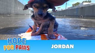A brave little dog gets rescued from the river.  His recovery will inspire you.  Please share.