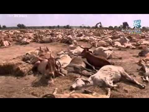 HAMBRUNA EN ÁFRICA. Los Reporteros 17 de Septiembre de 2011