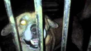 Rico o Cachorro Flamenguista