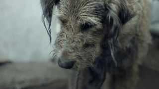 Pedigree 2013 Feeding Brighter Futures Ad Bad Dog, Good Dog.