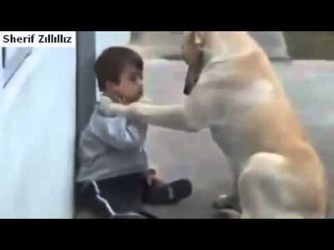 Un chien au coeur tendre veut donner son affection à un bébé trisomique...Soubhane Allah...!
