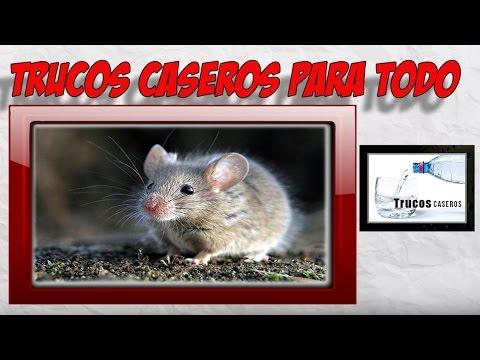 Como espantar ratas