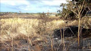 Aftermath of the Koloa Bypass Fire