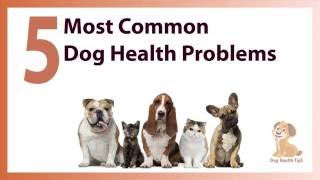 5 Most Common Dog Health Problems (dog health tips 2016)