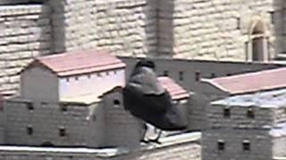 BIRDZILLA! Attack on Jerusalem.
