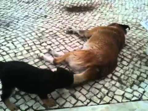 Xxx Mp4 Cadela Pequena Vs Cão Grande 3gp Sex