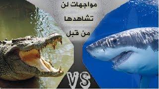 5 معارك نادرة جداً بين الحيوانات لو لم تصور لما صدقها أحد