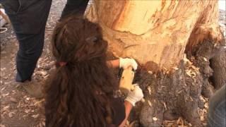 Rinascere albero  La seconda vita di un tronco terza fase