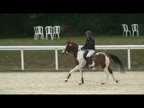♥ Requiem de Garlan- jumping horse  by Limbo