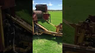 Big roll Harvester