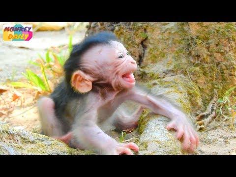 Xxx Mp4 WOW Valentin Cry Much Coz See Mom Go Far Newborn Cry Too Loud Call Mom Back Monkey Daily 2625 3gp Sex