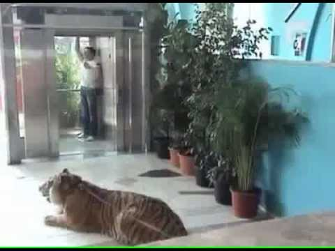 kamera e fsheht luani