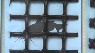 Aquaculture: Cage Culture