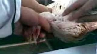 sawing palad c magdalena