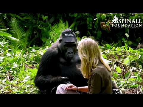 Heart warming moment Damian Aspinall s wife Victoria is accepted by wild gorillas OFFICIAL VIDEO