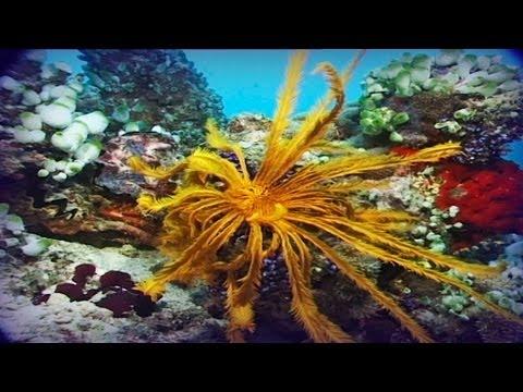 Maldivas el paraíso del buceo documental completo