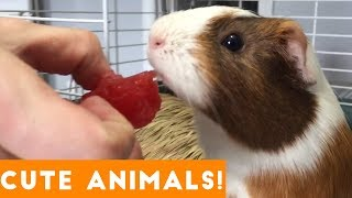 Cutest Pets of the Week Compilation December 2017 | Funny Pet Videos