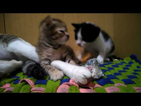 Xxx Mp4 Anak Kucing Imut Dan Lucu 3gp Sex